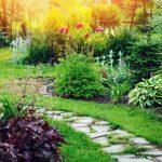 Nietypowe krzewy do małych ogrodów